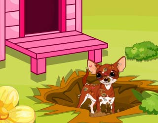 Game Chihuahua Puppy Care